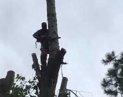 Photo #2: GONZALEZ TREE SERVICE