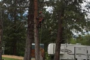 Photo #1: GONZALEZ TREE SERVICE