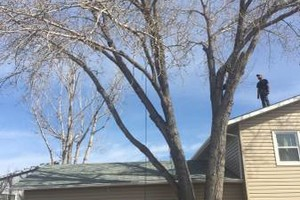 Photo #4: Tree service Munoz - removal/trimming services