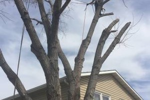 Photo #3: Tree service Munoz - removal/trimming services