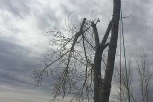 Photo #2: Tree service Munoz - removal/trimming services