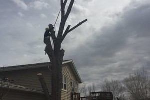 Photo #1: Tree service Munoz - removal/trimming services