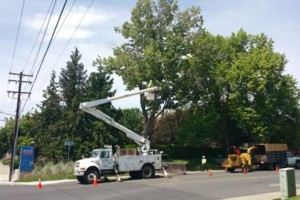 Photo #10: URIBES TREE SERVICE. 24/7 emergency services