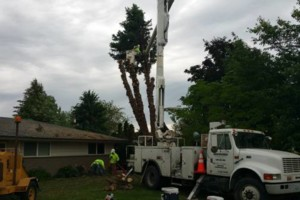 Photo #9: URIBES TREE SERVICE. 24/7 emergency services