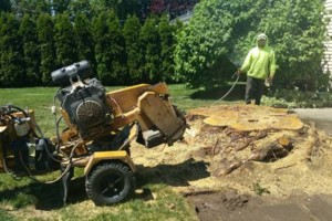 Photo #7: URIBES TREE SERVICE. 24/7 emergency services