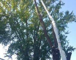 Photo #3: URIBES TREE SERVICE. 24/7 emergency services