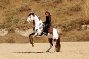 Photo #1: Professional Horse Training & Horsemanship Instruction