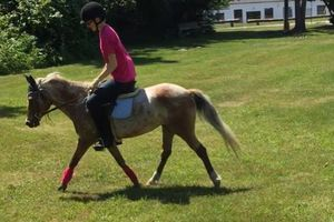 Photo #1: Beginner horse back riding lessons