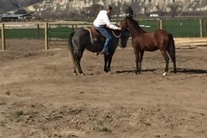 Photo #1: Horse Training, Lessons, Sales