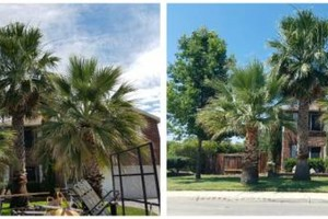 Photo #13: IndustriaLawn LLC. landscaping, pressure washing, tree service
