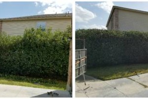 Photo #11: IndustriaLawn LLC. landscaping, pressure washing, tree service