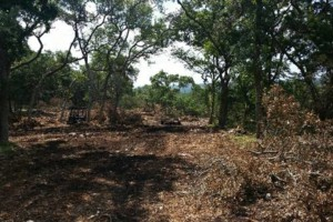Photo #1: Respectful and responsible land clearing services