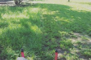 Photo #6: Firefighter Lawn Services/Mow, Trim, Edge and Clean-up