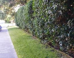 Photo #22: Lawn Care/ Cut Yards/ Tree Service/ Landscaping