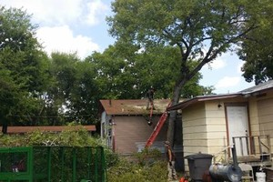 Photo #5: Lawn Care/ Cut Yards/ Tree Service/ Landscaping