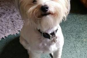 Photo #1: Dog Training/Halos Training and Behavior