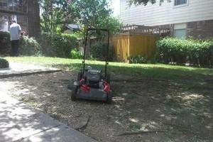 Photo #10: Lawn Care & Tree trimming