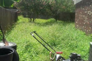 Photo #9: Lawn Care & Tree trimming