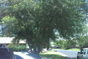Photo #5: Lawn Care & Tree trimming