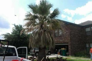 Photo #3: Lawn Care & Tree trimming