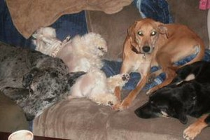 Photo #1: Pet sitting and boarding and training