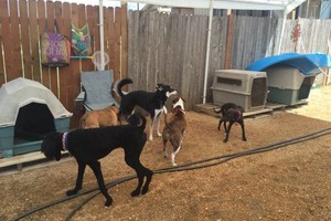Photo #18: Puppet's Studio. Home of the $10 Doggie Day Care