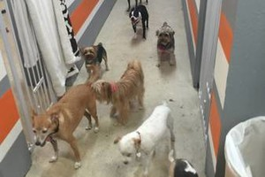 Photo #5: Puppet's Studio. Home of the $10 Doggie Day Care