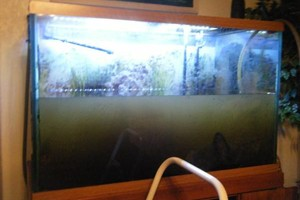 Photo #4: Aquarium Service. Aquarium Maintenance