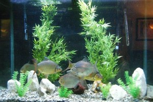 Photo #3: Aquarium Service. Aquarium Maintenance