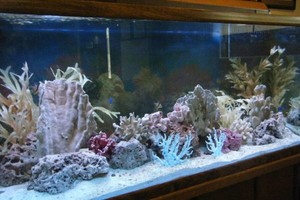 Photo #2: Aquarium Service. Aquarium Maintenance
