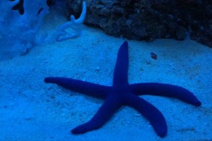 Photo #1: Aquarium Service. Aquarium Maintenance