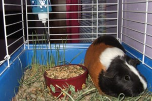 Photo #2: $3/day Small Animal Boarding Services
