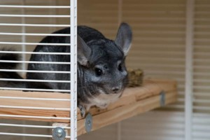 Photo #1: $3/day Small Animal Boarding Services
