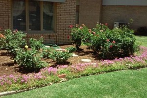 "Photo #3: Land and Home Improvement -  ""Keeping Lubbock Beautiful"""