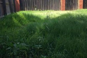 Photo #2: Redeemed Lawn Care - Hedge Trimming/Fertilizing/...