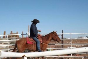 Photo #6: Horse Training and Care