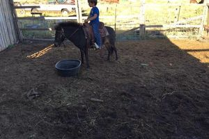 Photo #4: Horse Training and Care
