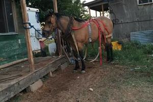 Photo #1: Horse Training and Care