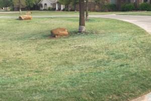 Photo #8: Don't Settle for Cheap Lawn Service! Turf Raider Lawn & Landscape