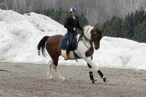 Photo #1: Horse Training/Care