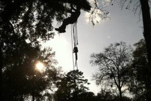 Photo #9: Arborist Aspects LLC (Tree Service)