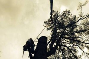 Photo #5: Arborist Aspects LLC (Tree Service)