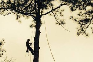 Photo #2: Arborist Aspects LLC (Tree Service)