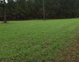 Photo #6: Lawn & Wildlife Serive