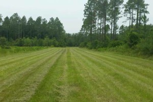 Photo #1: New View Land Clearing. Bush Hogging / Field Mowing
