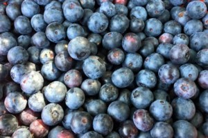 Photo #1: BLUEBERRIES - $4.00 Qt.