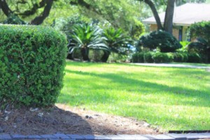 Photo #6: Dickerson Landscaping/ Lawn Care