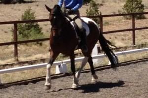 Photo #1: Tonaya Farm/Horseback Riding/Horse Boarding/Training