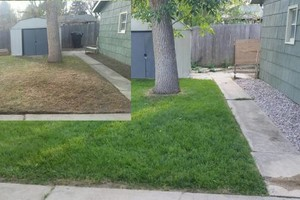 Photo #1: Licensed and insured Lawncare