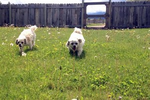 Photo #1: Dog Boarding ~ No Kennels, Stress-free!